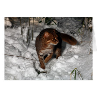 Christmas card - Rusty spotted cat