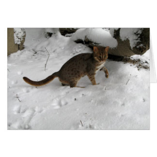 Christmas card - Rusty spotted cat 2