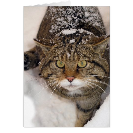 Christmas card - Scottish Wildcat