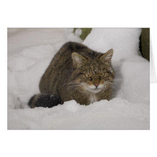 Christmas card - Scottish wildcat 2