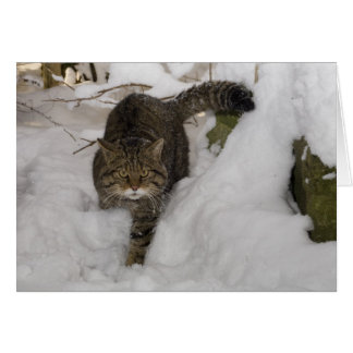 Christmas card - Scottish wildcat 4