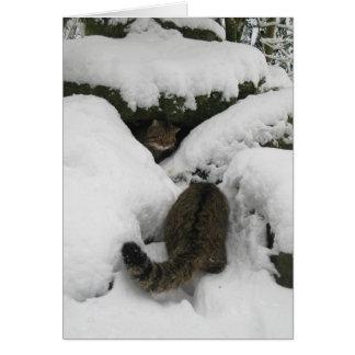 Christmas card - Scottish wildcat 7