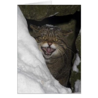 Christmas card - Scottish wildcat 8