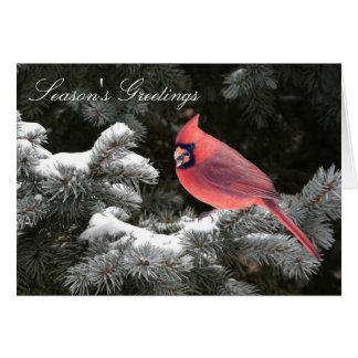 Christmas cardinal cards