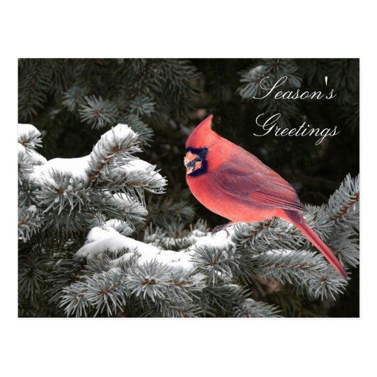 Christmas cardinal postcard