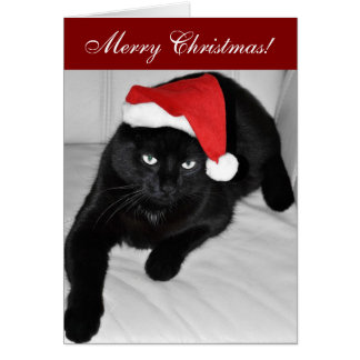 Christmas cat 4 cards