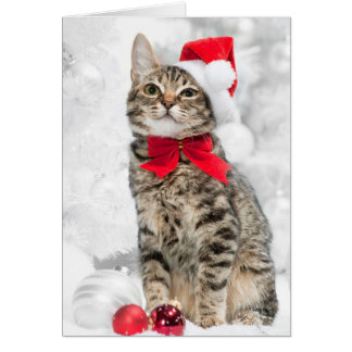 Christmas Cat At Red Santa's Hat Near Christmas Card