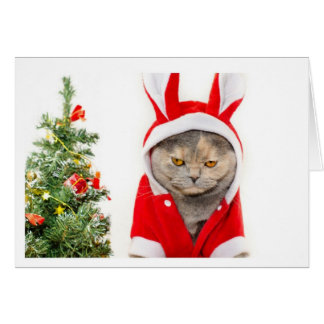 Christmas - Cat Card
