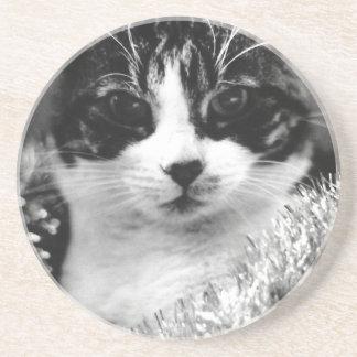 Christmas Cat Coaster