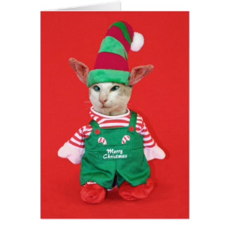 Christmas Cat Elf Card