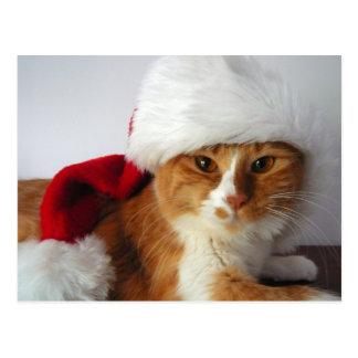 Christmas Cat in Santa Hat Postcard