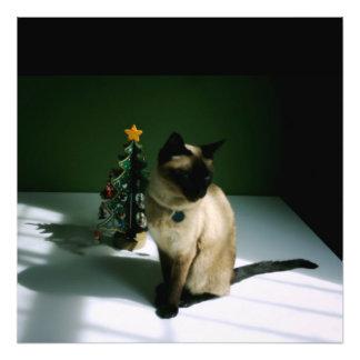 Christmas Cat Photo Art
