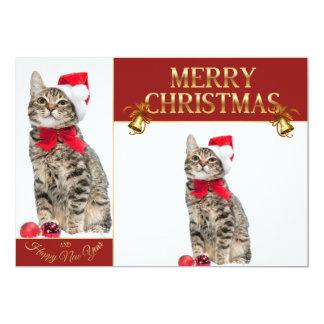 Christmas cat - santa claus cat - cute kitten card