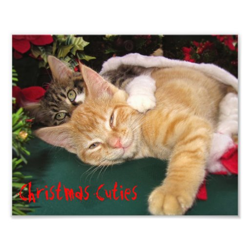 Christmas Cats, Cute Kittens Hugging, Kitty Smile Art Photo