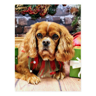 Christmas - Cavalier King Charles Spaniel - Lily Postcards
