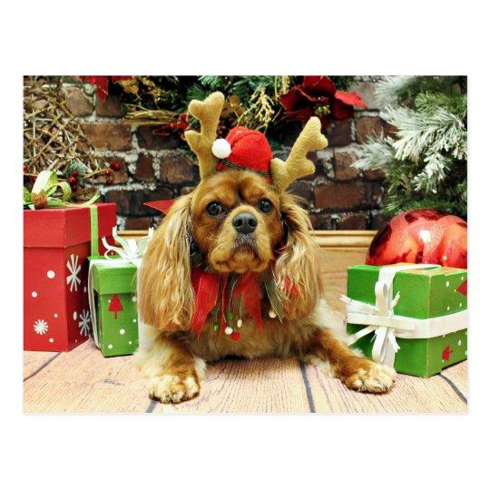 Christmas - Cavalier King Charles Spaniel - Meyers