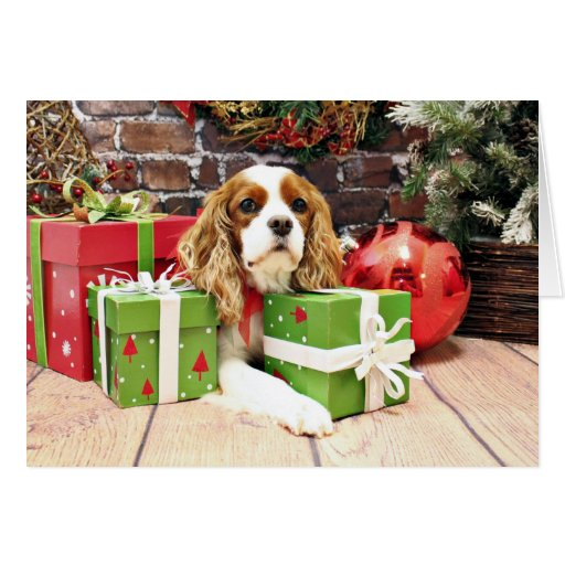 Christmas - Cavalier King Charles Spaniel - Poppy Greeting ...
