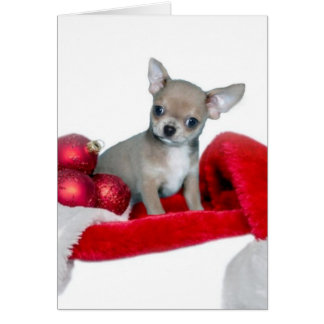 Christmas Chihuahua dog Greeting Card