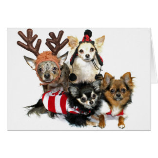Christmas Chihuahuas Card