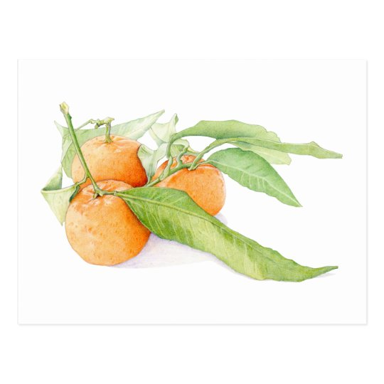 Christmas Clementines Postcard