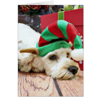 Christmas - Cockapoo - KC Card