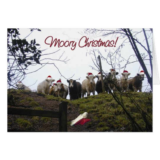 Christmas cows wearing Santa hats. Card