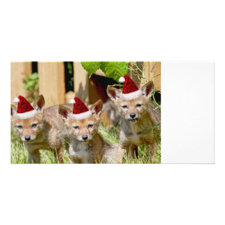 Christmas Coyote Pups Personalised Photo Card