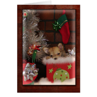 Christmas Cute Chihuahua Puppy In Box Card