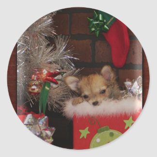 Christmas Cute Chihuahua Puppy In Box Round Sticker