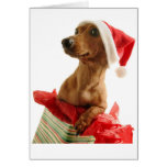Christmas Dachshund Greeting Card