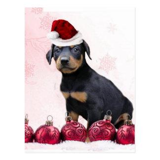 Christmas Doberman puppy Postcard