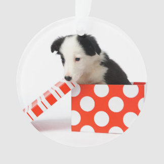 Christmas Dog In A Gift Box Ornament