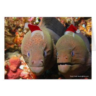 Christmas Eels Cards