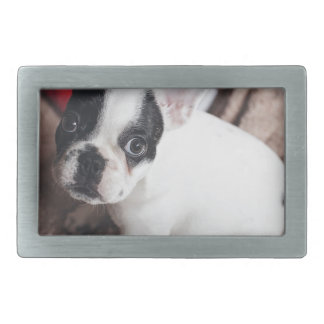 Christmas Frenchie Belt Buckle