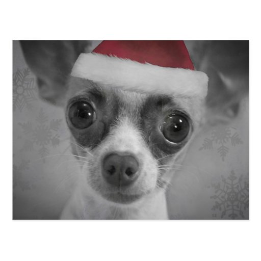 Christmas Funny Chihuahua Puppy with Santa Hat Post Card