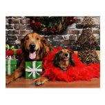 Christmas - Golden Retriever Max - Doxie - Chloe Post Card