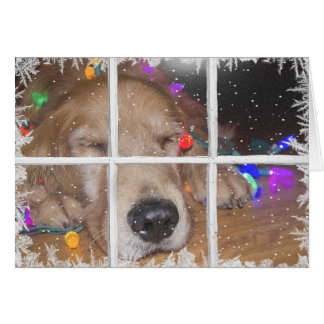 Christmas golden retriever with lights card