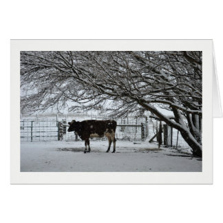 Christmas. Greeting Card. Cow in Snow. Card