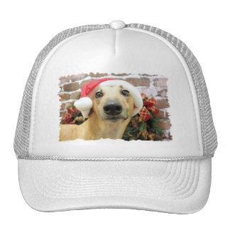 Christmas - Greyhound - Pena Mesh Hats