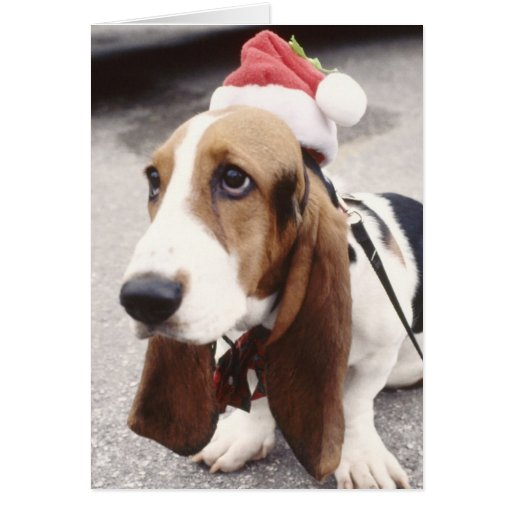 Christmas Hound Greeting Card Card