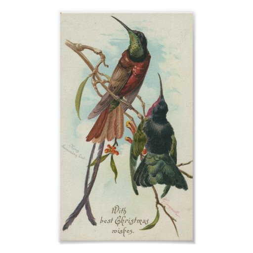 Christmas Hummingbirds Poster