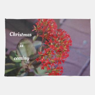Christmas is coming red flowers tea towel
