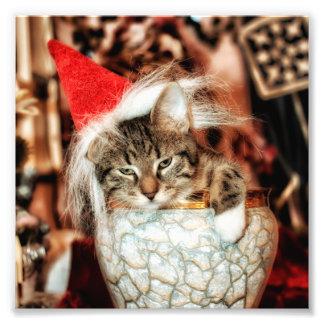 Christmas Kitten Photographic Print