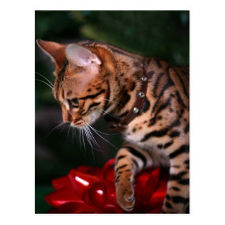 Christmas Kitty Photo (Domestic Bengal Cat) Postcard