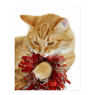 Christmas kitty playing postcard