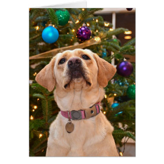 Christmas Labrador Retriever Card