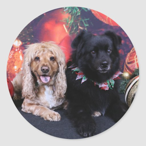 Christmas - Labrador X Cheyanne  Cocker X Sundance Stickers