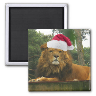 Christmas Lion Wearing Santa Hat Square Magnet