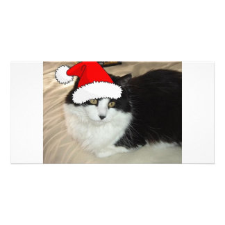 Christmas Long Haired Black and White Kitten Photo Cards