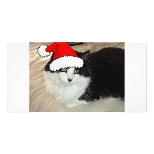 Christmas Long Haired Black and White Kitten Photo Card